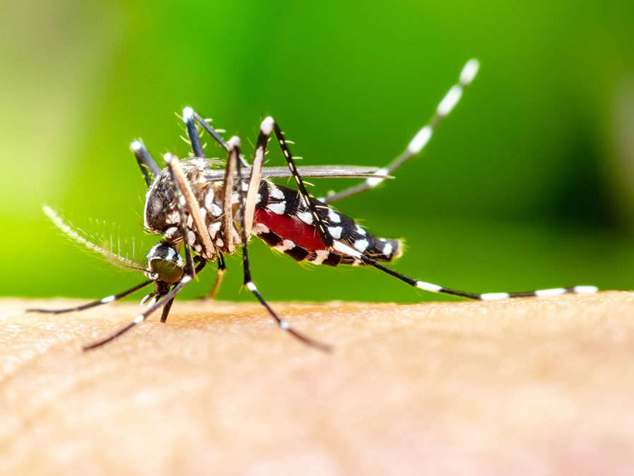 mosquito control in North Charleston